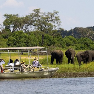 Discover Chobe Wildlife Safari Day Trip
